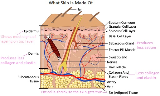 process of ageing skin